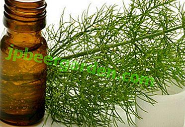 Propriétés utiles de l'huile d'aneth, recettes pour cuisiner à la maison.  Où puis-je l'acheter?