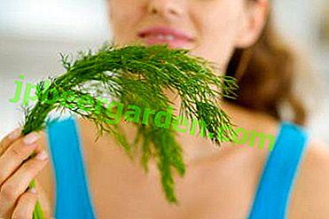 Чи можна зелений кріп або його насіння при грудному вигодовуванні?  Рецепти для лактації і інші нюанси
