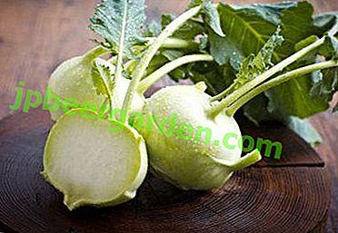 Схожа на ріпу капуста - знайомимося з кальрабі!  Все, що потрібно знати про це корисному овочі