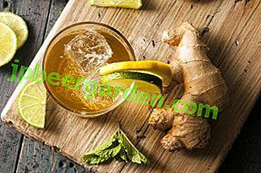 Схуднення за 2 тижні - чи реально?  Рецепти на основі імбиру, мінеральної води, лимона та інших інгредієнтів