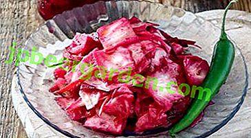 Les recettes les plus délicieuses pour le chou mariné dans le style Gurian avec et sans betteraves