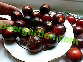 Cherry Tomato Black ou Black Cherry: description de la variété au goût sucré unique