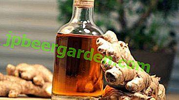 Gingembre pour perdre du poids: propriétés de la racine de la plante et recettes de teintures au citron, miel et autres ingrédients