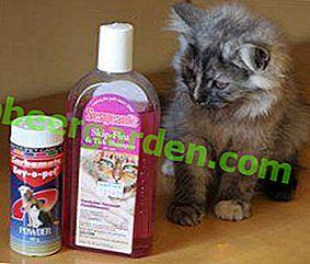 Chroń i nie krzywdź!  Środki na pchły dla kociąt: szampony, krople i inne