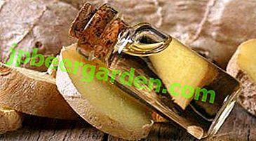 Olio essenziale idrofilo e zenzero.  Proprietà, suggerimenti per l'uso e altri suggerimenti utili
