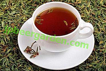 Thé vivifiant et cicatrisant à base de rhododendron - propriétés de boisson, recettes