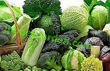 Die Königin des Gemüses und die Garantie der Gesundheit: Was ist die Verwendung von Kohl