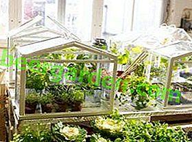 Незамінні домашні помічники для любителів землеробства - міні-парники для будинку своїми руками
