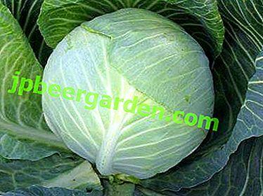 Valentina-Kohl: das Aussehen des Gemüses, seine detaillierte Beschreibung sowie ein Foto