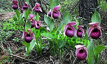 Интересни факти за живота на орхидеите в природата