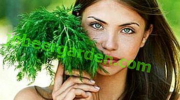 Was ist die Verwendung von Dill zur Gewichtsreduktion?  Diät und Rezepte mit dieser Pflanze.