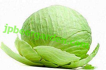 Найкращі сорти капусти: квасимо, зберігаємо, вирощуємо, готуємо!