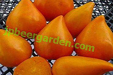 Ein Geschenk aus Europa - Tomaten deutsche rote und orange Erdbeeren in Ihrem Garten: Sortenbeschreibung und Foto