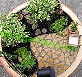 Choisissez des plantes pour un mini-jardin en pot