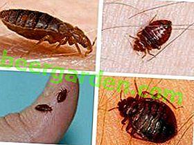 Популарни лијекови за грицкалице код куће: како уклонити инсекте у стану, предности и недостатке разних хемикалија