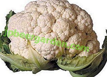 Схуднути на цвітній капусті - легко!  Дієтичні рецепти і хитрощі