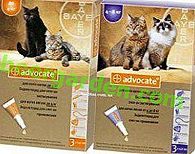 Pour protéger vos chats!  Avocat: gouttes pour chats contre les puces et les tiques