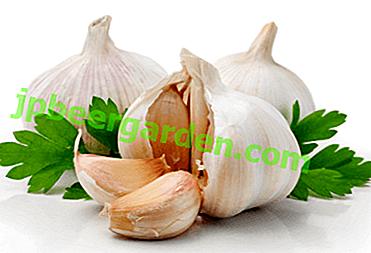 Hausgemachte Knoblauchrezepte für Hämorrhoiden