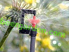 Крапельний полив для теплиці: системи автоматичного поливу, схеми зрошення, обладнання та пристрій