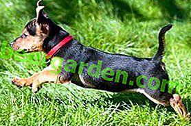 Protecție bună pentru animalul dvs. de companie!  Prezentare generală a gulerelor de purici și căpușe pentru câini
