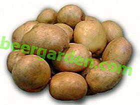 La variété de pommes de terre la moins exigeante et la plus productive