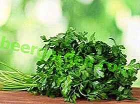 Першун - његове здравствене користи, садња и узгој