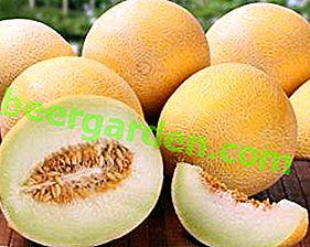 Melone nel tuo giardino: coltivazione e cura