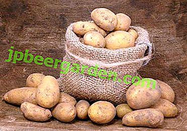 Tout savoir sur le bon stockage des pommes de terre dans un magasin de légumes: conditions, température, étapes et méthodes