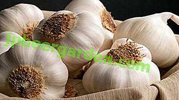 I danni e i benefici dell'aglio: in che modo una pianta influenza il cuore e i vasi sanguigni, come può essere trattata con esso?