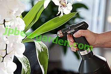 Qu'est-ce qu'Actara et comment traiter les orchidées avec un pesticide?
