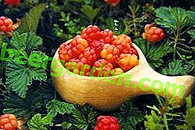 Cloudberries - una bacca del Nord unica