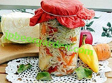 De délicieuses recettes de chou, marinées pour l'hiver dans des bocaux, et tous les secrets de sa préparation