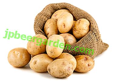 Увеличаваме добива многократно: какви торове са необходими за картофи и как да ги прилагаме правилно?