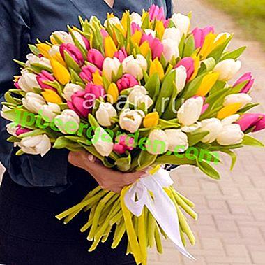 Tulipes - des hôtes de jardin charmants et colorés