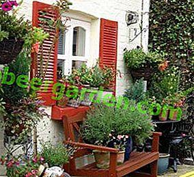 Le jardinage en pot est un excellent moyen de diversifier le monde végétal de votre jardin.