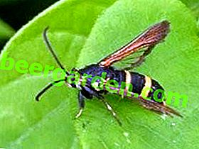 Sägewerke verschiedener Typen: Unterschiede und Schädlingsbekämpfungsmaßnahmen