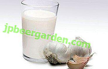 Eine eigenartige, aber sehr nützliche Kombination von Milch mit Knoblauch: Rezepte der traditionellen Medizin, Kontraindikationen