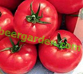 Bello all'esterno e delizioso all'interno - Tomato Raspberry Tinkle: descrizione della varietà e foto