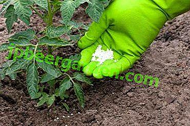 Comment choisir le meilleur engrais pour les semis et les tomates de serre et ne pas se tromper: TOP des meilleurs remèdes de cette année